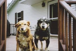 Brownie&Tommy - American Gothic Dogs