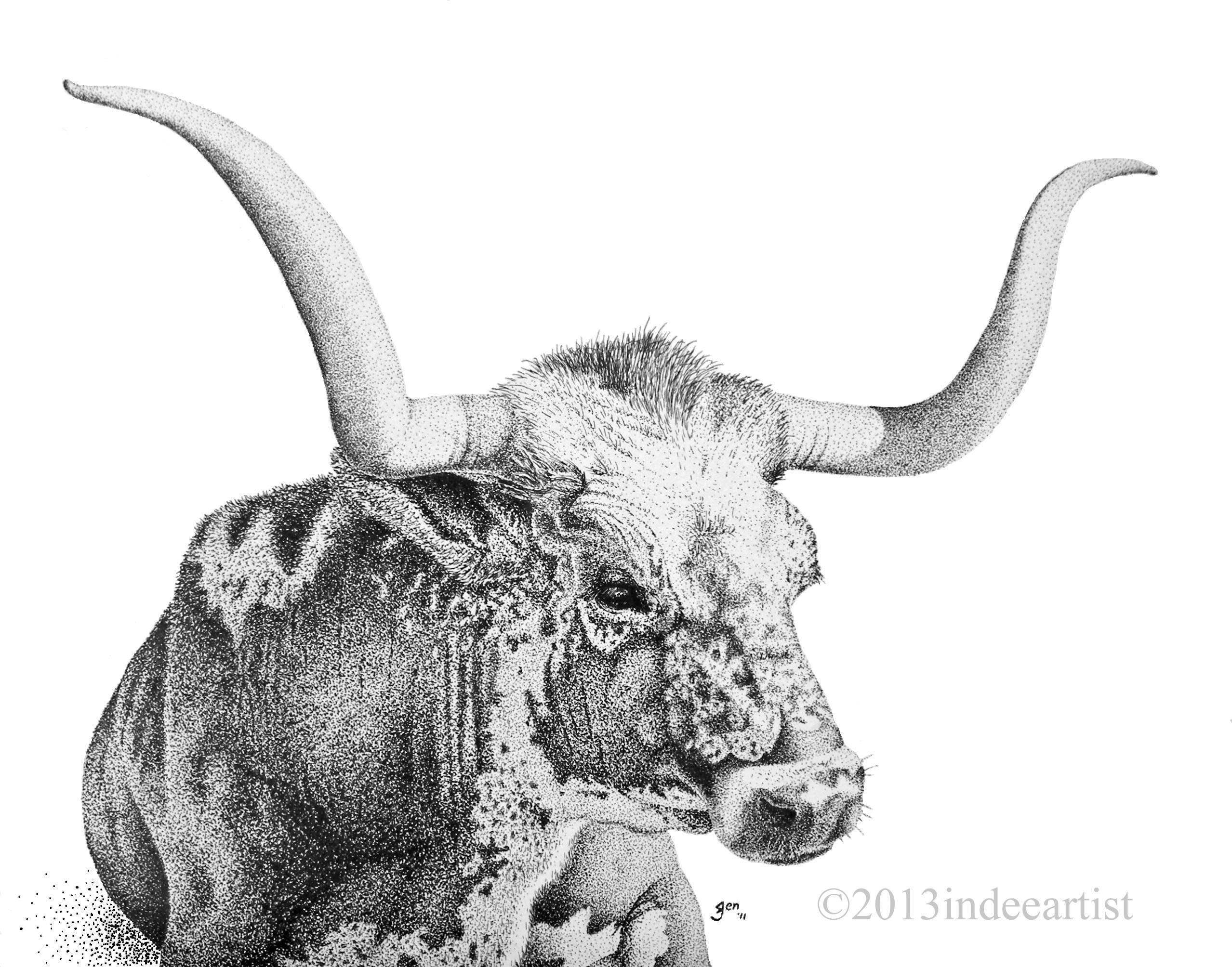 image gallery longhorn cattle drawings