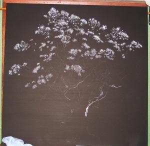 Oak TreeWIP (4) 002