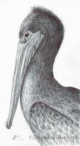 PelicanCR