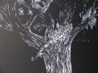 Oak Tree (6) 003