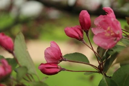2013 Fresh Flowers 005