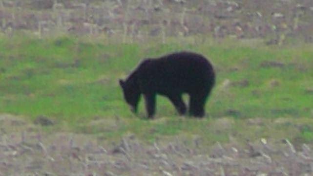 The Bear 002