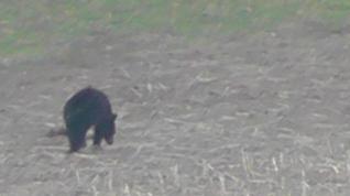 The Bear 003