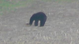The Bear 004