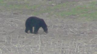 The Bear 011