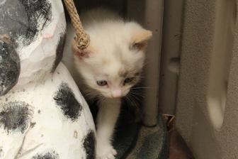 New Kittens! 019