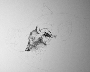 This Little Piggy WIP 002