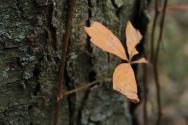 Fall - October 15, 2013 027