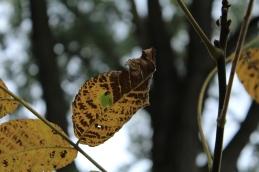 Fall - October 15, 2013 029