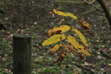 Fall - October 15, 2013 031
