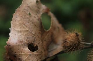 Fall - October 15, 2013 042