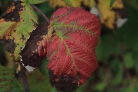 Fall - October 15, 2013 071