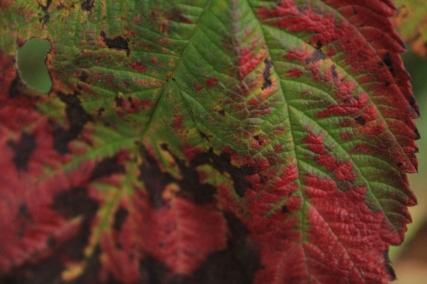 Fall - October 15, 2013 074