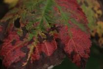 Fall - October 15, 2013 081