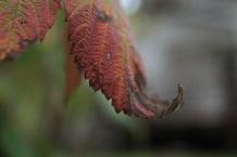 Fall - October 15, 2013 083