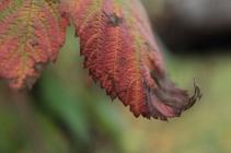 Fall - October 15, 2013 084