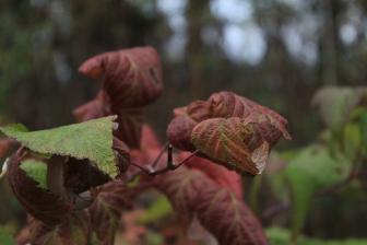 Fall - October 15, 2013 085