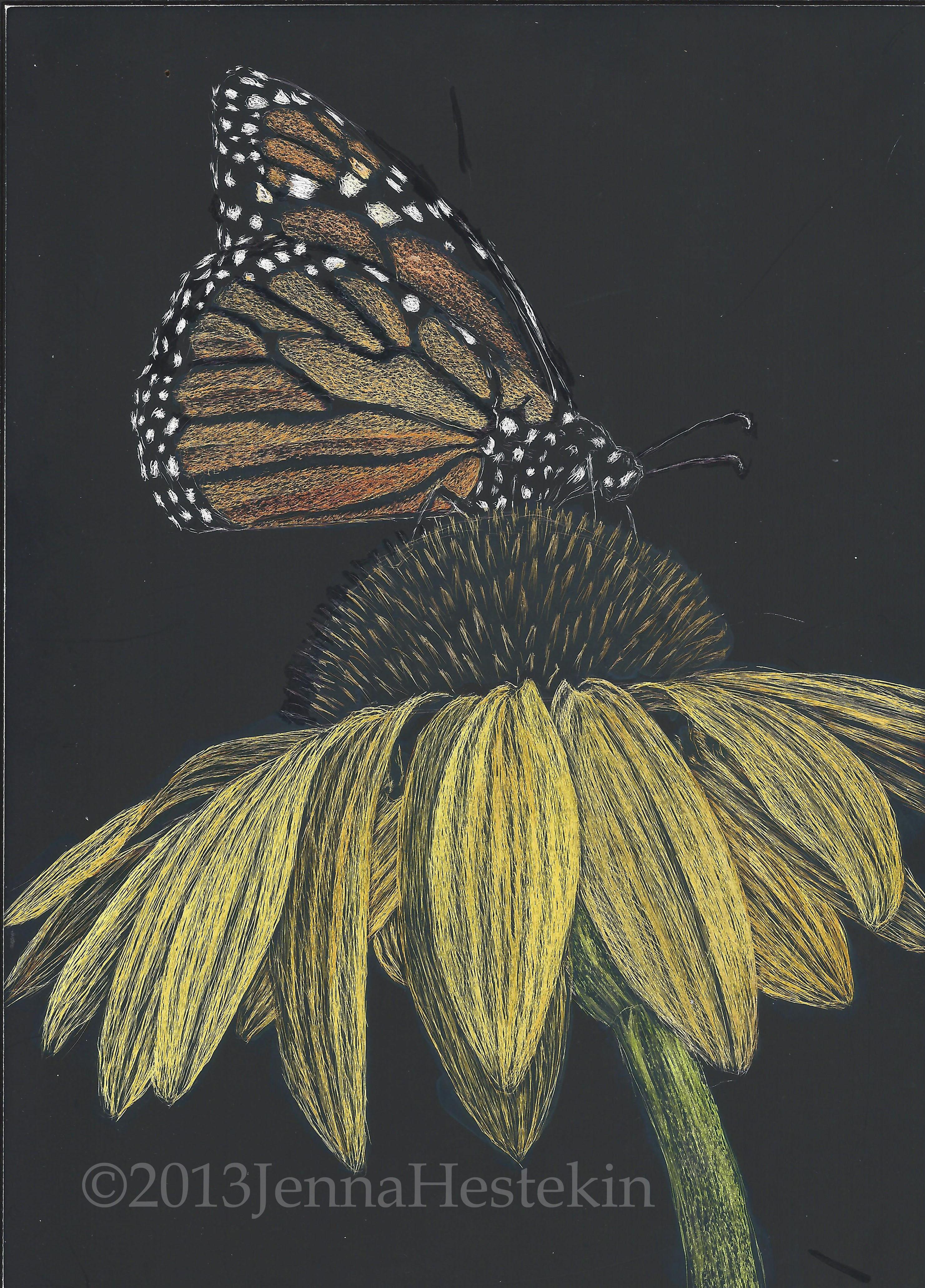 Butterfly scratchboard - photo#23