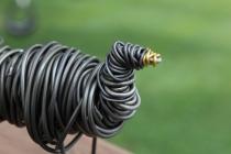 Piggy Finish & Black Turkey Sculpture 021