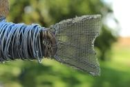 Fish Sculpture 065