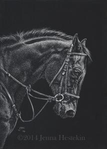 Scratchboard Horse Final CR