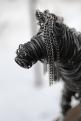 Black Horse Sculpture, Cats 018 - Copy