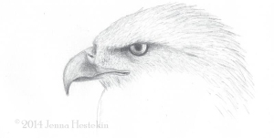 Eagle Sketch CR