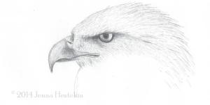 Eagle Sketch CR