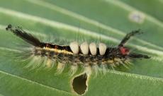 Caterpillar 030