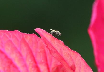 Dewy Flowers 007