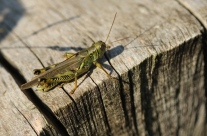 Macro Insects 047