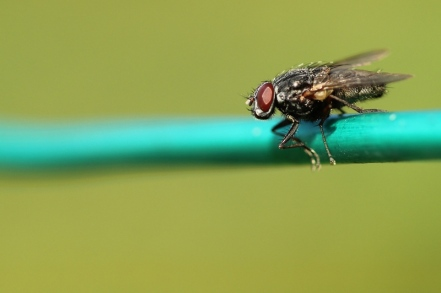Macro Insects 070