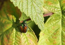 Macro Insects 073