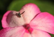Macro, many insects 093