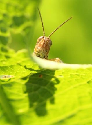 Macro, many insects 129