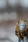 Lion sculpture finished 029 - Copy