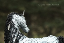 Andalusian 15