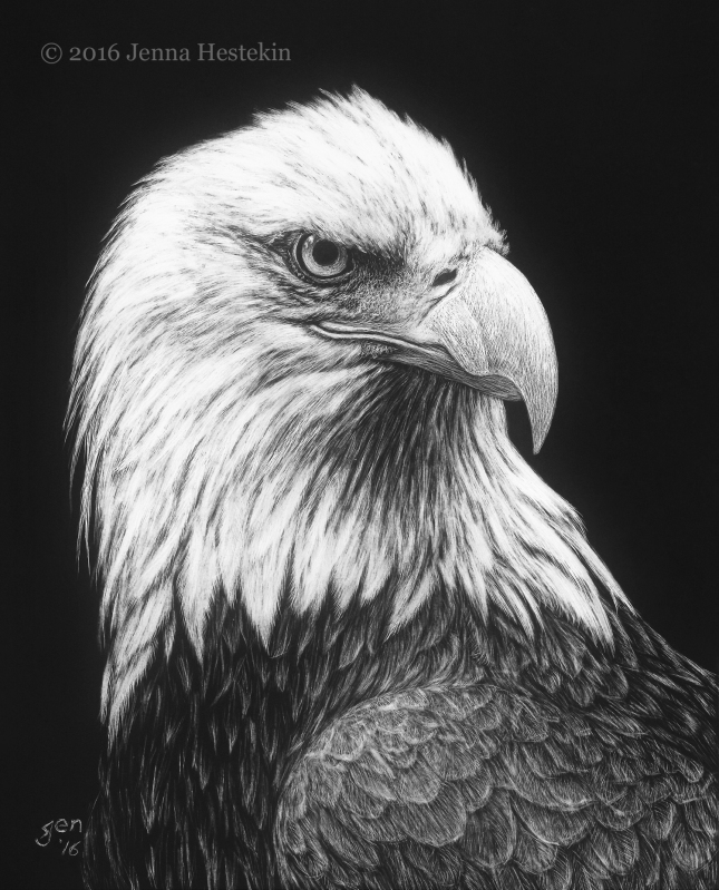 Bald Eagle CR