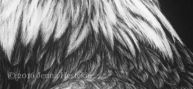 Bald Eagle Crop 2
